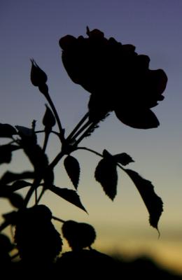 20110614154327-rosanegra-reverand.png