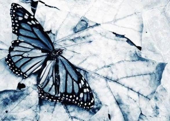 20180604150233-las-mariposas-de-magia-helada.jpg