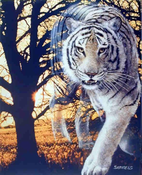 20180608010515-los-tigres-astrales.jpg