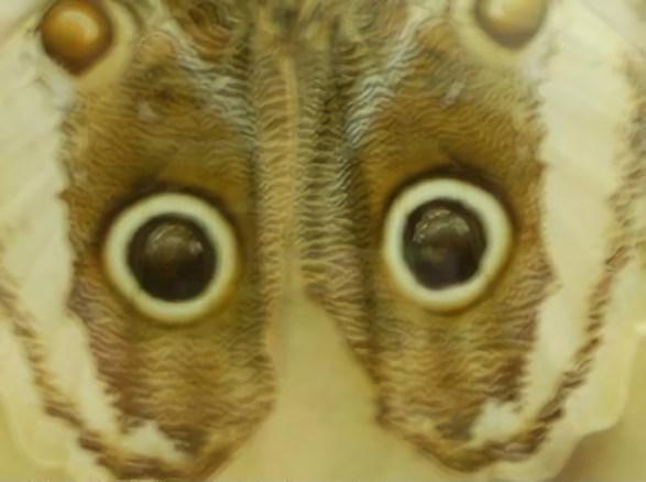 20180623002714-las-mascaras-de-mariposa.jpg