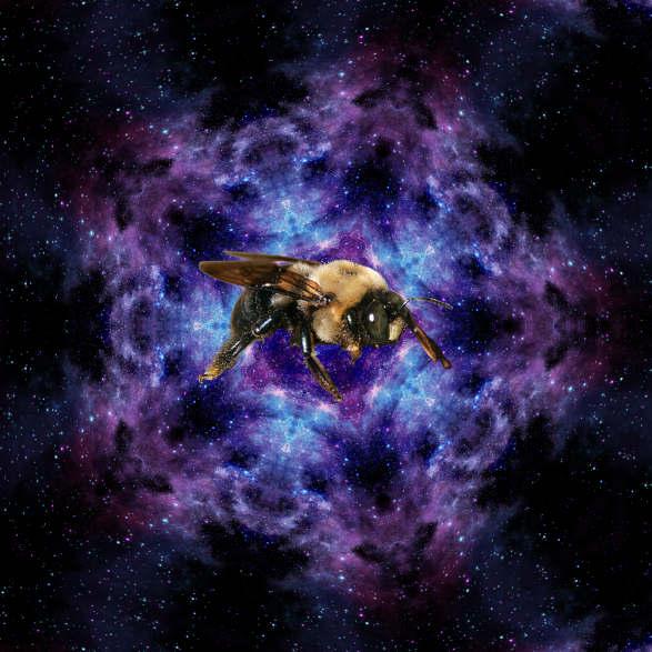 20190620012255-las-abejas-astrales.jpg